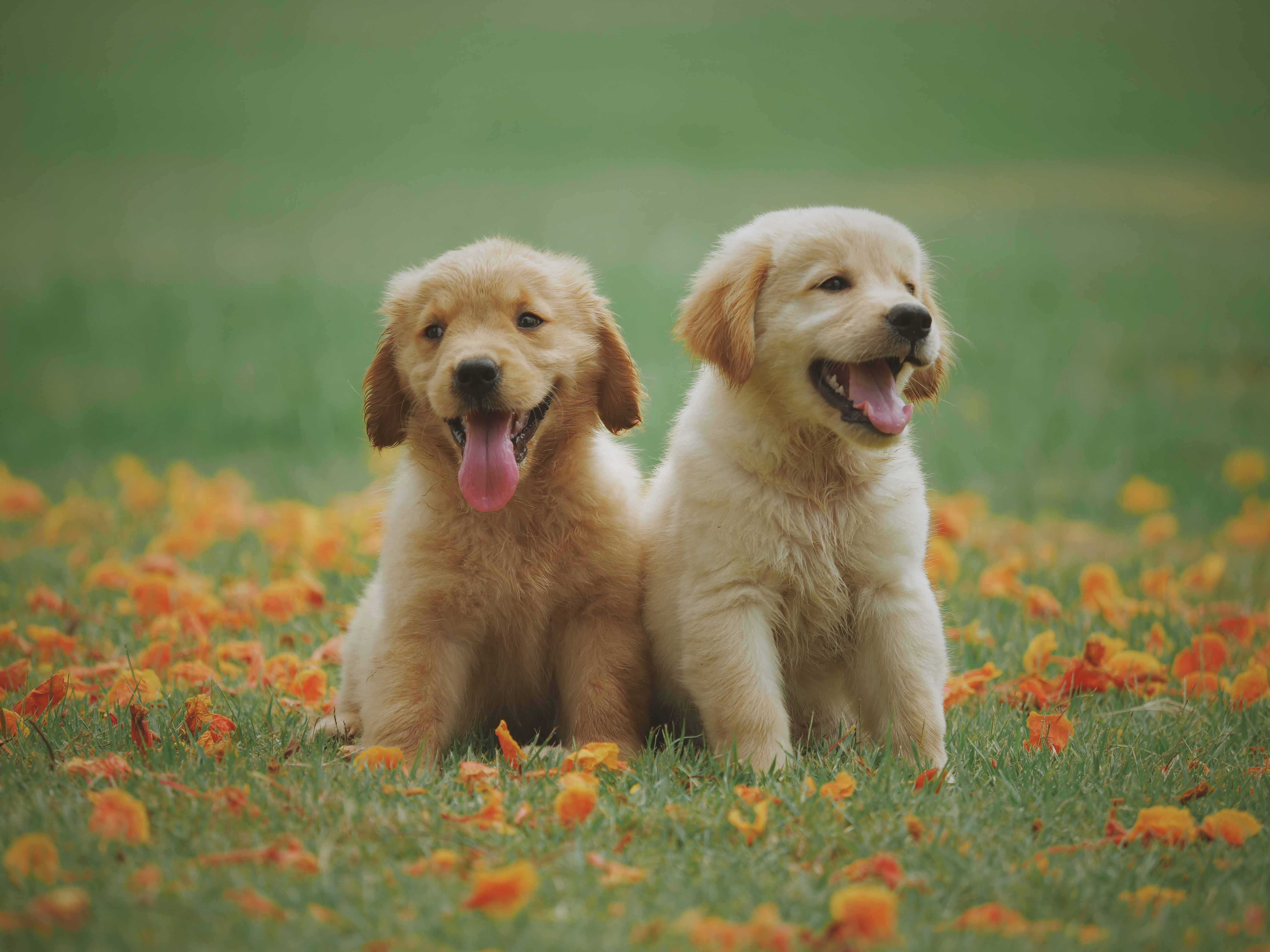 two puppies sitting in bed of flowers